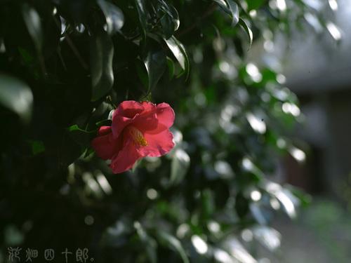 090326b07mamiyam645_fujireala